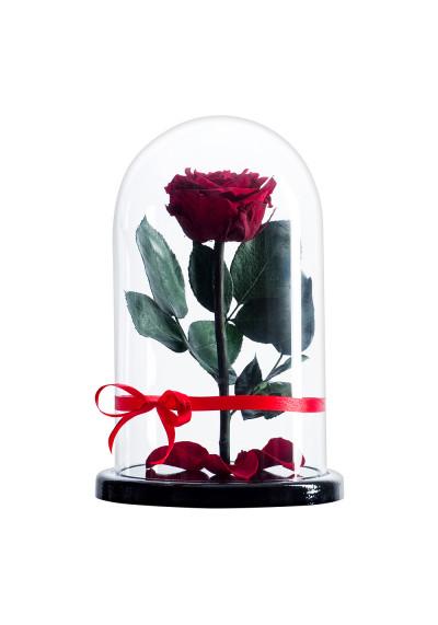 Роза в колбе, колба Premium, бутон 6 см, бордовая