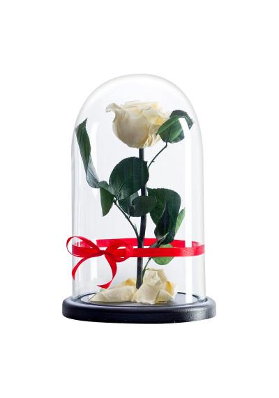 Роза в колбе, колба Premium, бутон 6 см, кремовая