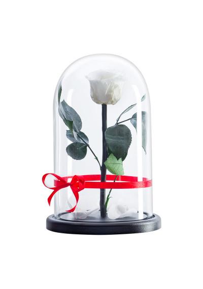 Роза в колбе, колба Premium, бутон 6 см, белая