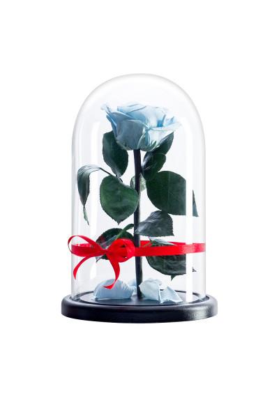 Роза в колбе, колба Premium, бутон 6 см, голубая