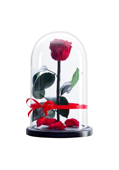 Роза в колбе, колба Premium, бутон 6 см, красная