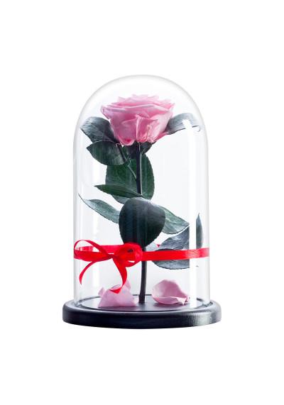 Роза в колбе, колба Premium, бутон 6 см, нежно-розовая