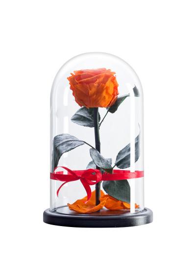 Роза в колбе, колба Premium, бутон 6 см, оранжевая