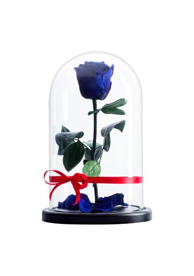 Роза в колбе, колба Premium, бутон 6 см, синяя