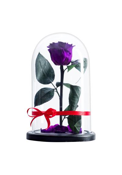 Роза в колбе, колба Premium, бутон 6 см, фиолетовая