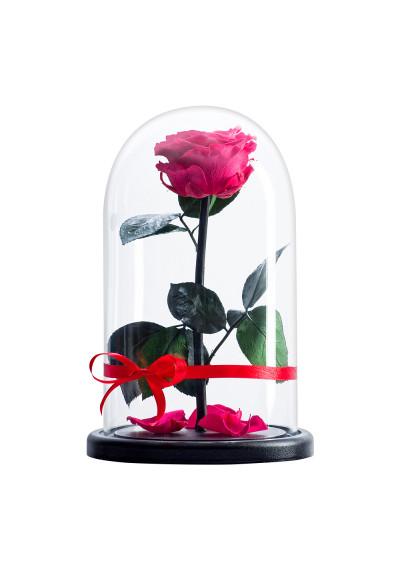 Роза в колбе, колба Premium, бутон 6 см, фуксия