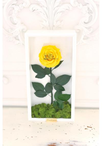 Стабилизированная роза в картине, желтая, бутон 11 см (бонита), белая рама