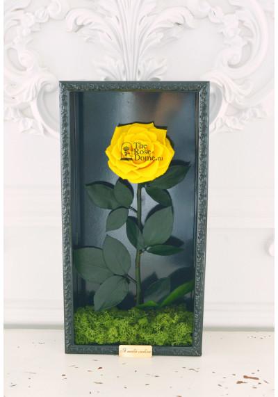 Стабилизированная роза в картине, желтая, бутон 11 см (бонита), черная рама