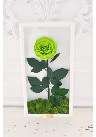 Стабилизированная роза в картине, зеленая, бутон 11 см (бонита), белая рама