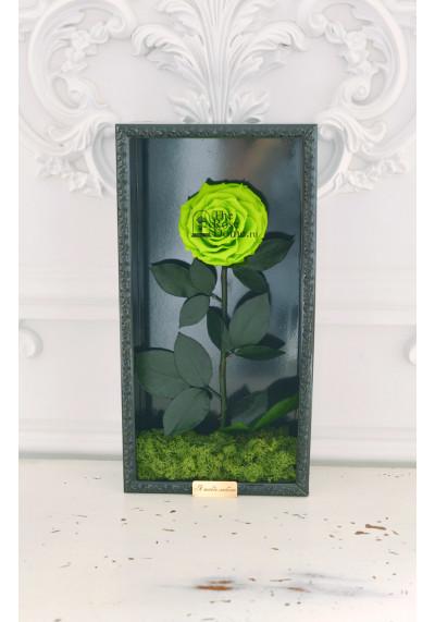 Стабилизированная роза в картине, зеленая, бутон 11 см (бонита), черная рама