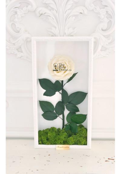 Стабилизированная роза в картине, белая, бутон 11 см (бонита), белая рама