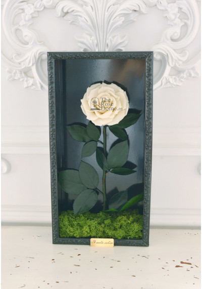 Стабилизированная роза в картине, белая, бутон 11 см (бонита), черная рама