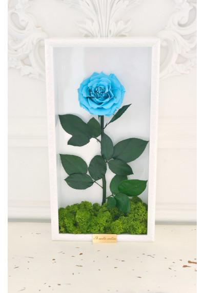 Стабилизированная роза в картине, голубая, бутон 11 см (бонита), белая рама