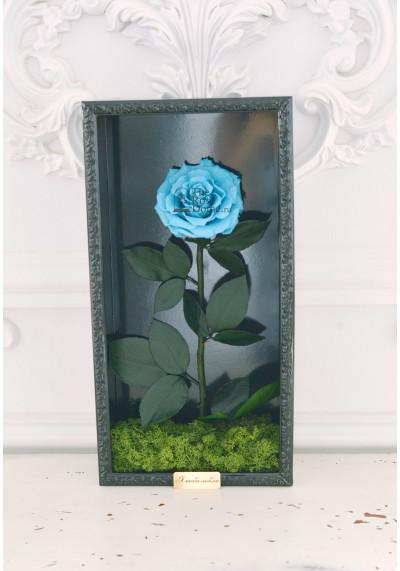 Стабилизированная роза в картине, голубая, бутон 11 см (бонита), черная рама