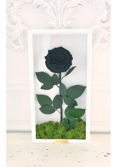 Стабилизированная роза в картине, черная, бутон 11 см (бонита), белая рама
