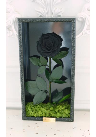 Стабилизированная роза в картине, черная, бутон 11 см (бонита), черная рама