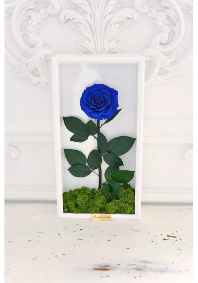 Стабилизированная роза в картине, синяя, бутон 11 см (бонита), белая рама