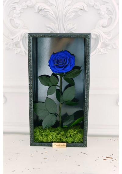 Стабилизированная роза в картине, синяя, бутон 11 см (бонита), черная рама