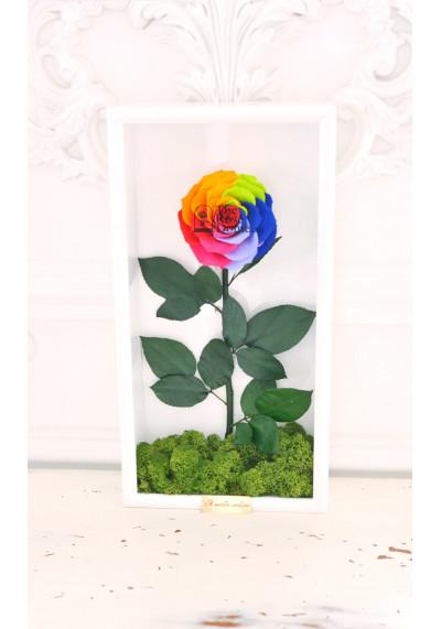 Стабилизированная роза в картине, радужная, бутон 11 см (бонита), белая рама