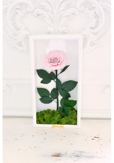 Стабилизированная роза в картине, нежно-розовая, бутон 11 см (бонита), белая рама