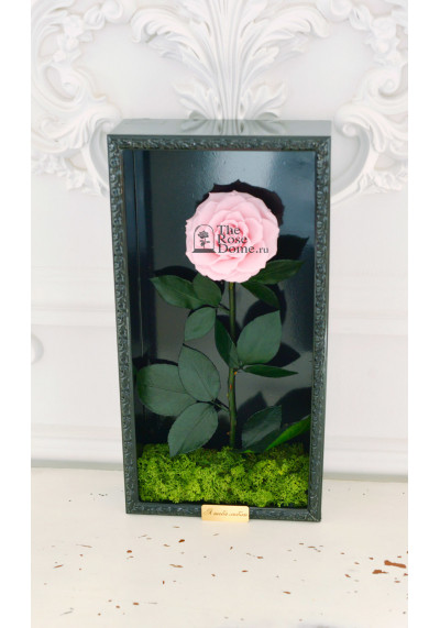 Стабилизированная роза в картине, нежно-розовая, бутон 11 см (бонита), черная рама