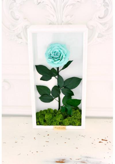 Стабилизированная роза в картине, тиффани, бутон 11 см (бонита), белая рама