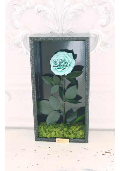 Стабилизированная роза в картине, тиффани, бутон 11 см (бонита), черная рама