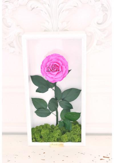 Стабилизированная роза в картине, ярко-розовая, бутон 11 см (бонита), белая рама