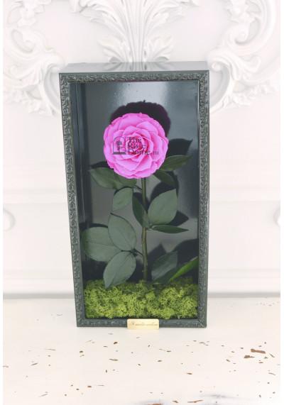 Стабилизированная роза в картине, ярко-розовая, бутон 11 см (бонита), черная рама