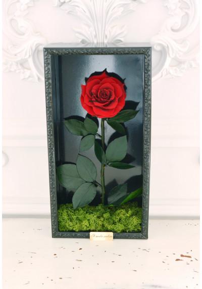 Стабилизированная роза в картине, бордовая, бутон 11 см (бонита), черная рама