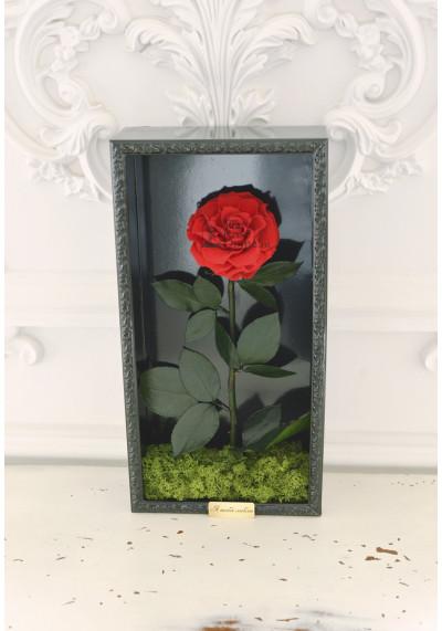 Стабилизированная роза в картине, красная, бутон 11 см (бонита), черная рама