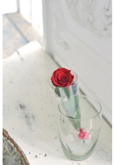 Стабилизированная роза на стебле, бутон 6 см, бордовая