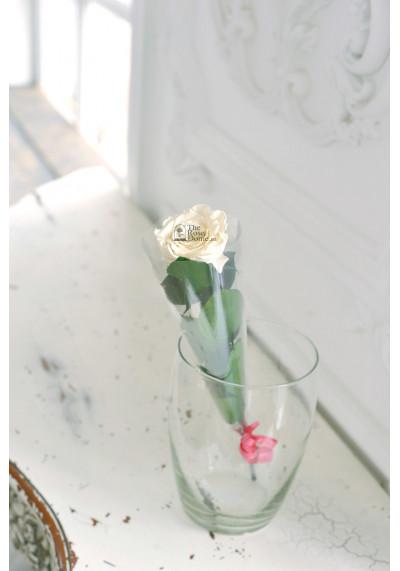 Стабилизированная роза на стебле, бутон 6 см, белая