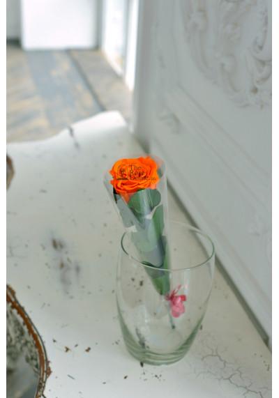 Стабилизированная роза на стебле, бутон 6 см, оранжевая