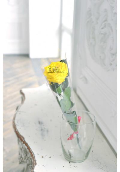 Стабилизированная роза на стебле, бутон 8 см, желтая