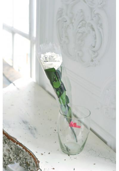 Стабилизированная роза на стебле, бутон 8 см, белая