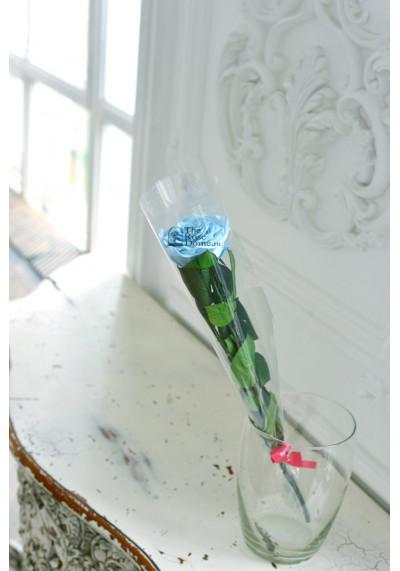 Стабилизированная роза на стебле, бутон 8 см, голубая
