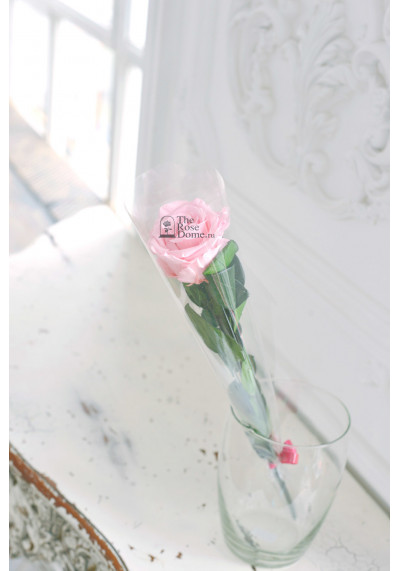 Стабилизированная роза на стебле, бутон 8 см, нежно-розовая