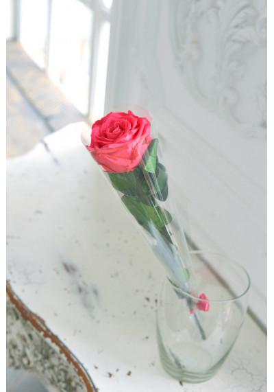 Стабилизированная роза на стебле, бутон 8 см, фуксия