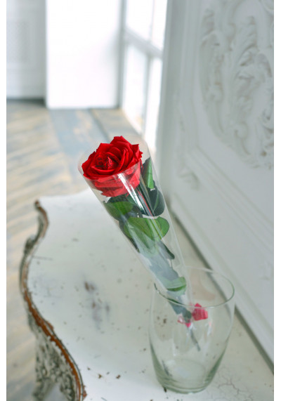 Стабилизированная роза на стебле, бутон 8 см, красная