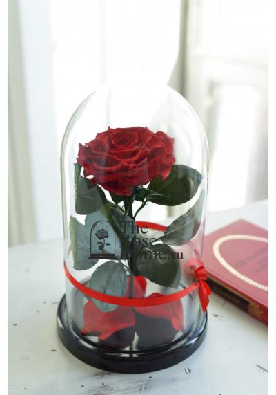 Роза в колбе, колба Premium бутон 11 см (бонита), красная
