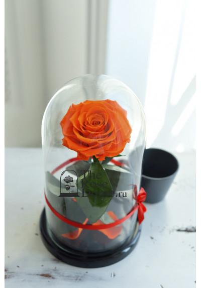 Роза в колбе, колба Premium бутон 11 см (бонита), оранжевая
