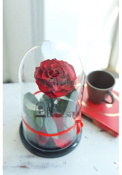 Роза в колбе, колба Premium бутон 11 см (бонита), бордовая