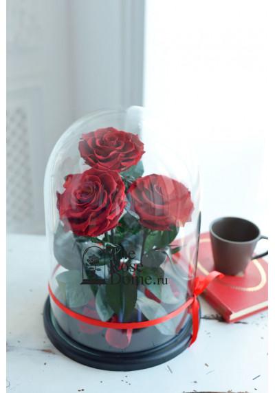 Роза в колбе ТРИО, колба King, бутон 11 см (бонита), бордовая