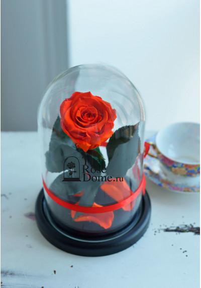 Роза в колбе, колба Mini, бутон 6 см, оранжевая