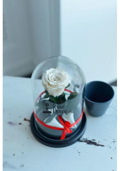 Роза в колбе, колба Mini, бутон 6 см, белая