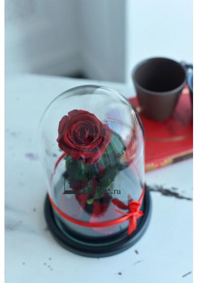 Роза в колбе, колба Mini, бутон 6 см, бордовая