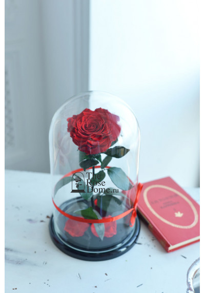 Роза в колбе, колба King, бутон 12 см, красная