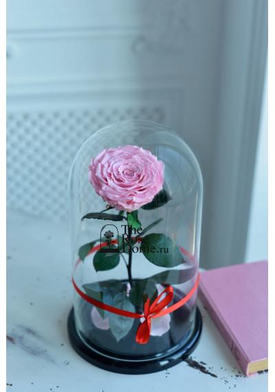 Роза в колбе, колба King, бутон 12 см, нежно-розовая