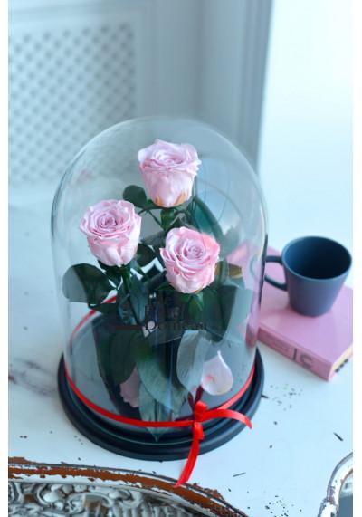 Роза в колбе ТРИО, колба King, бутон 6 см, нежно-розовая